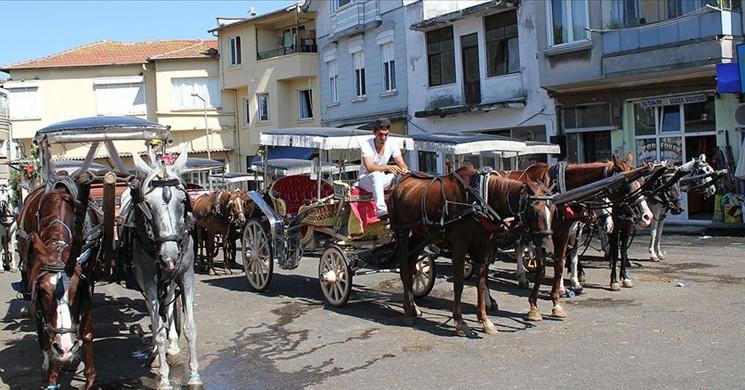 Adalar'da 81 At İtlaf Edildi