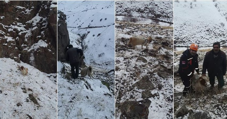 Keçisi Kayalıklarda Mahsur Kalan Besiciye AFAD Yardım Etti