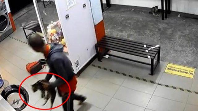 3 kediyi çamaşır makinesine atarak öldüren cani kameralara yakalandı