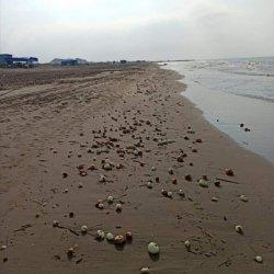 Adana'da plajı dolduran soğanlar şaşırttı