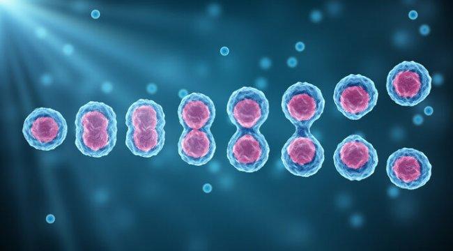 Yenilemek çok kolay: Kök hücre tedavisi nedir?