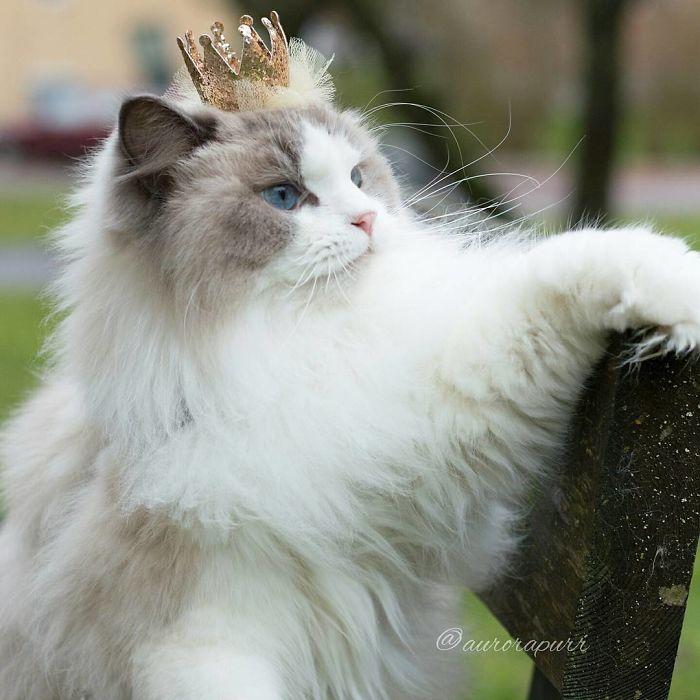 Kedi İsimleri